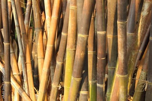 In de dag Bamboo dense bamboo in the garden