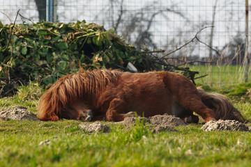 Pony juckt sich die Stirn