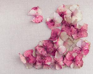 Hydrangea flower petals in bottom right corner on vintage fabric