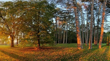 Panorama of Summer - autumn tree in forest park, motion