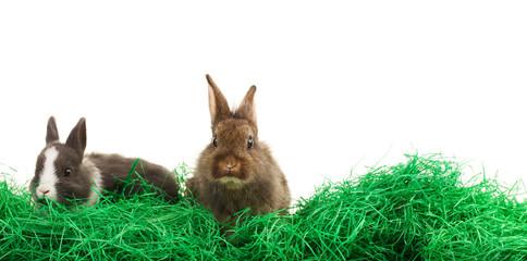 zwei Hasen im Ostergras Flyer