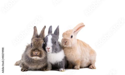 Tiere Freisteller Hasen