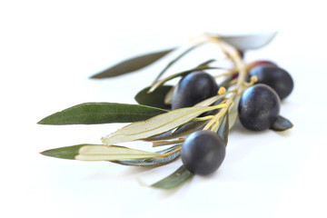 Black olives on branch