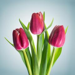 Strauß aus Tulpen