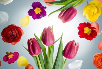 Arrangement aus Frühlingsblühern