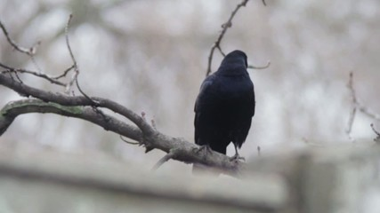 Crow on a tree