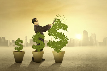 Entrepreneur manage the money tree