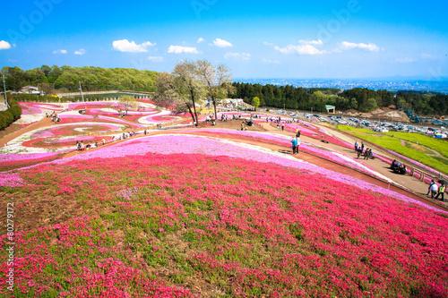 箕郷芝桜公園