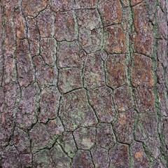 Close up view of a natural texture