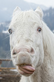 crazy white horse