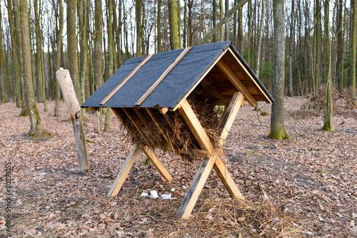 Paśnik w lesie - 80296155