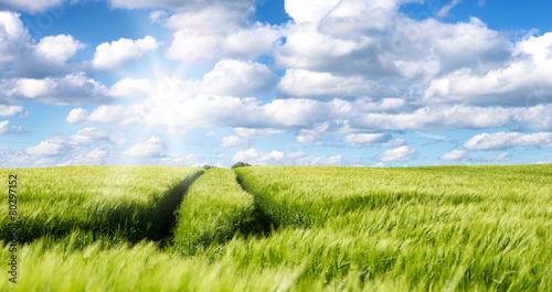 Leinwanddruck Bild landschaft im frühling hintergrund