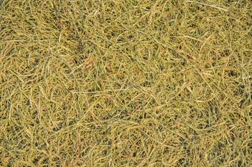 Die grass background