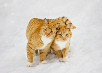 two cats nestled to each other outdoor in snowy background