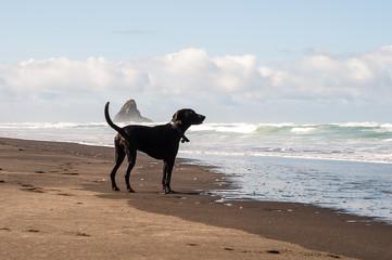 dog in Karekare Beach