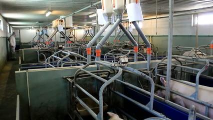 Contemporary pig farm