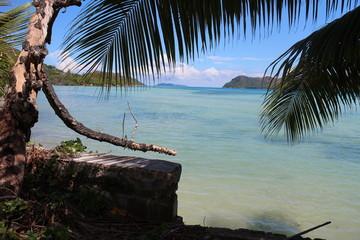 Blick aufs Meer durch Palmenblätter