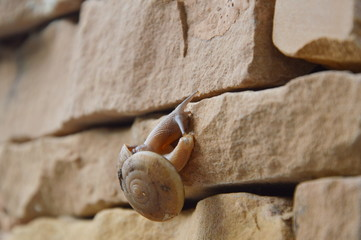 snail crawl on the wall