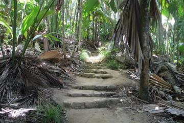 Treppe im Dschungel