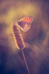 Vintage photo of butterfly