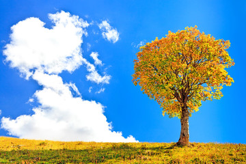 lonely tree and a big cloud on blue sky background