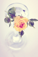 Yellow rose in a glass.