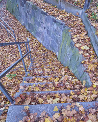 autumn leaves covering outdoor stairs