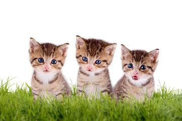 Junge Kätzchen auf Wiese