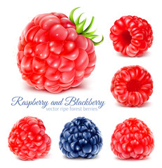 Raspberries and blackberry.