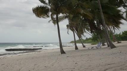 Palmeras durante una tormenta tropical