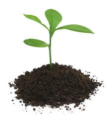 Plant in fertile soil
