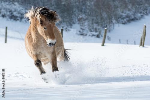 Poster Pferd galoppiert im Schnee