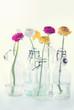 Colorful ranunculus flowers