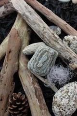 Littoral : Bois flotté - Galets - Algues marines