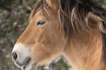 Seitliches Portrait eines Pferdes
