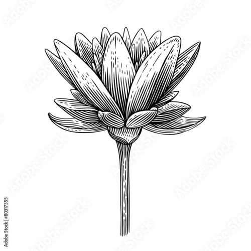 lotus - 80317355