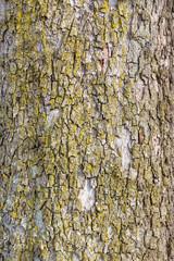 Rinde an einem Baum