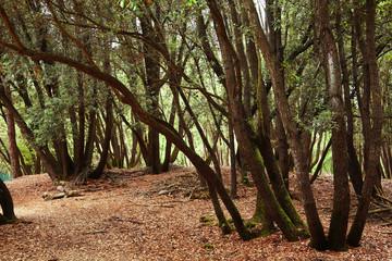 bosco di mesola ferrara