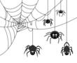 Spider on cobweb - 80320519