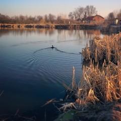 Morning near Lake