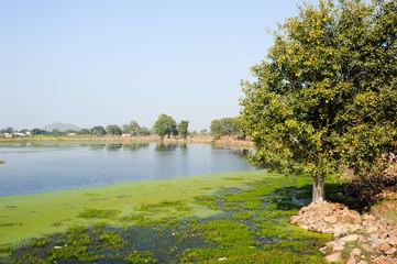 Narora lake at the village of Khajuraho