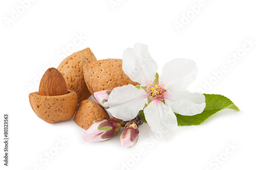 Almond Whith Flower Poster