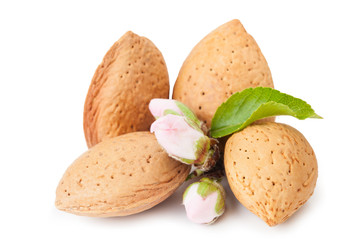 Almond Whith Flower