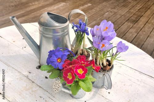 In de dag Krokussen fleurs printanières en pot en terrasse