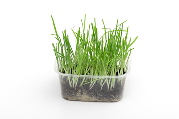 grass on the white background