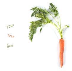 Young carrots with tops of vegetable on white background with te