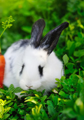 Funny baby white rabbit with a carrot on grass