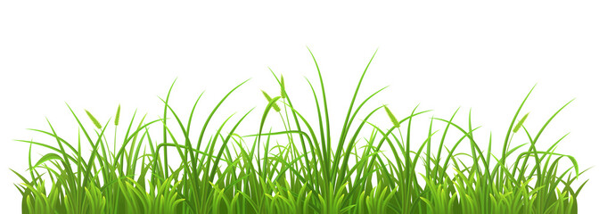 Fresh green grass on white background, vector illustration