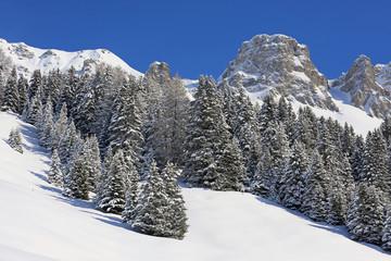 Bergtannenwald