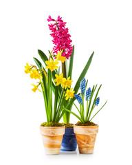 Spring flowers in flowerpots